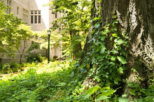 university campus tree