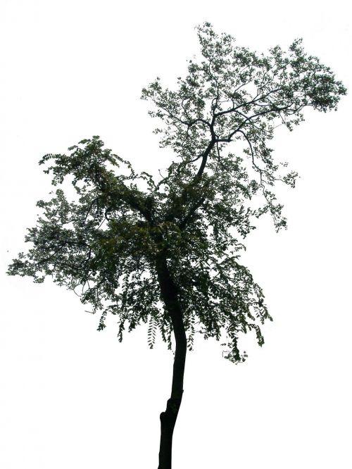 nežinomas,vardas,medis,2
