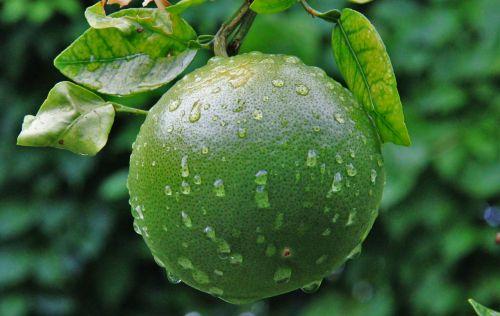 unripe orange raindrop green