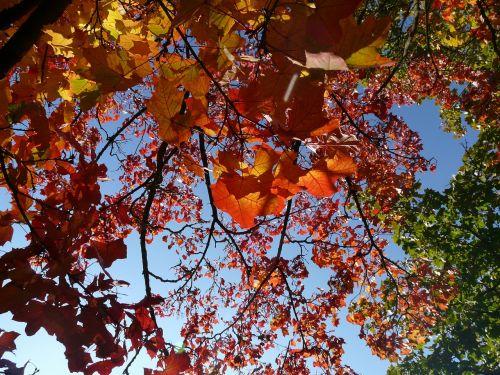 up high fall foliage