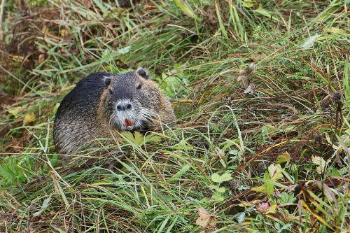 upper bavaria nature mammal
