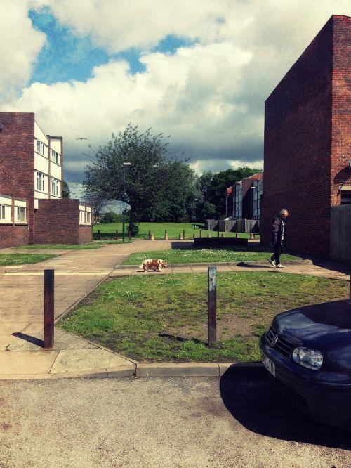miesto,Grunge,svetimas,šuo,turtas,pastatas,butus,gatvė,Londonas,gyvūnas,šunys,naminis gyvūnėlis,vaikščioti,vaikščioti