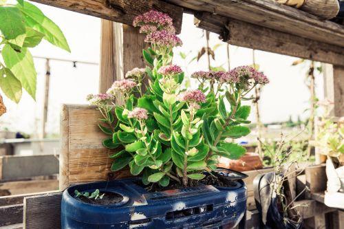 urban gardening garden plant