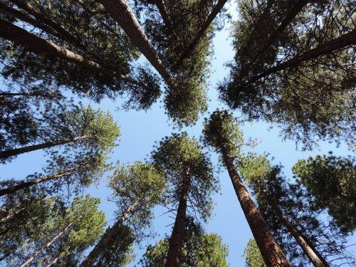 usa trees natinalpark