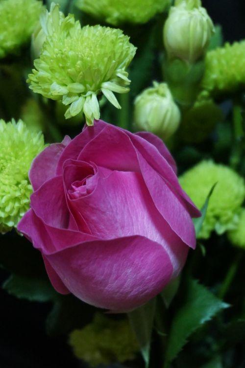 valentine birthday send flowers