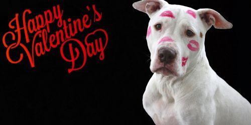 valentine's day love february