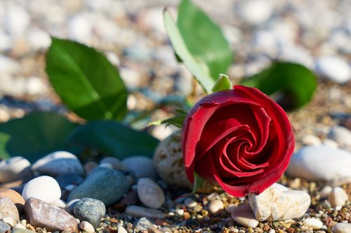 valentine's day  love  romance