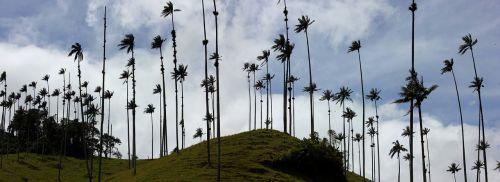 valle de cocora panorama colombia