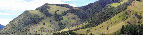 valle de cocora panorama palm trees