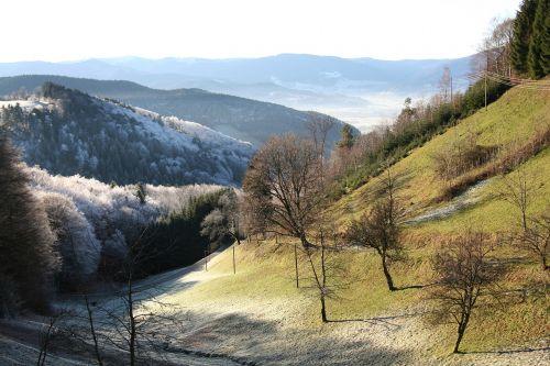 valley morgentau black forest