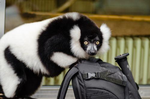 Vari Black And White, Very Curious!