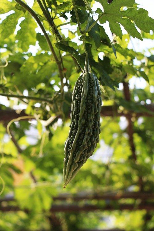 vegetable  sustainable  garden