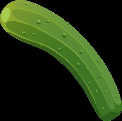 vegetable cucumber organic