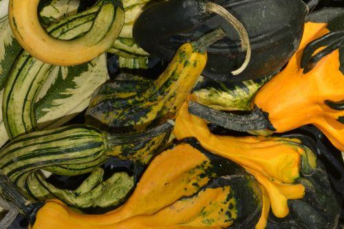 vegetables zucchini autumn