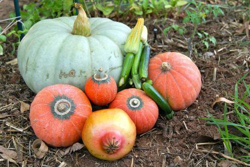 vegetables pumpkin zucchini