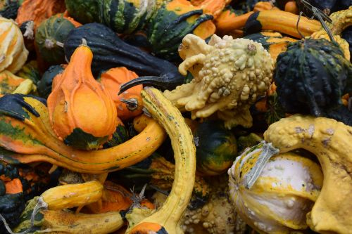 vegetables veggies pumpkin