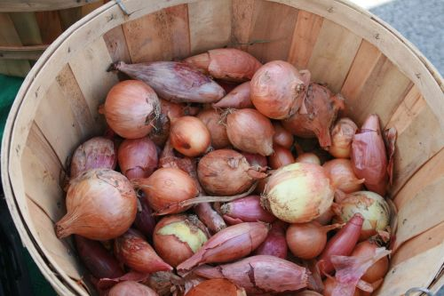vegetables farmer's market basket