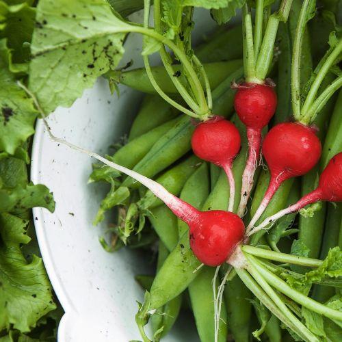vegetables harvest green