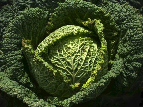vegetables savoy drop of water