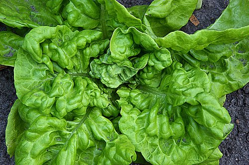 vegetables  salad  lettuce leaves