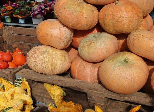 vegetables  pumpkin  autumn