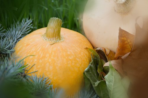 vegetables  pumpkin  orange