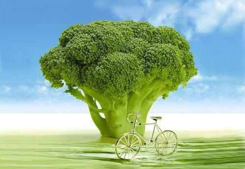 vegetables broccoli arboretum