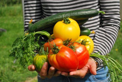 vegetables gardener vegetable garden