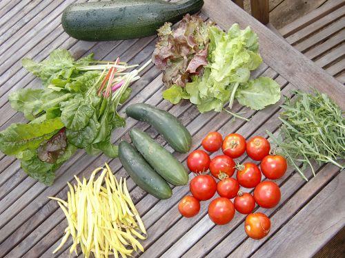 vegetables garden frisch