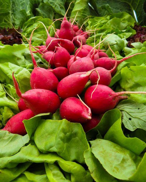 vegetables radishes radish
