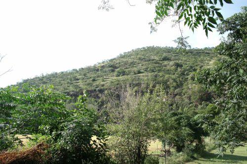Vegetation In Wake Of Hill