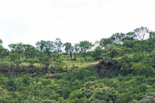 Vegetation On A Hill