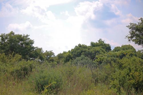 Vegetation With Bushes And Trees