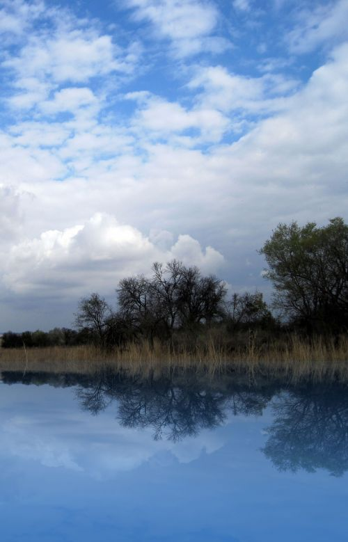 Veld And Tree Reflection