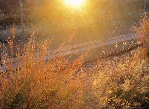 Veld Bathed In Sunlight