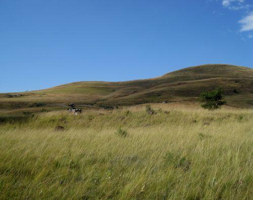 Veld, Drakensberg, Kwa-zulu Natal