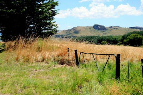 Veld Grass And Farm Gate