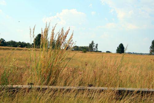 Veld Grass