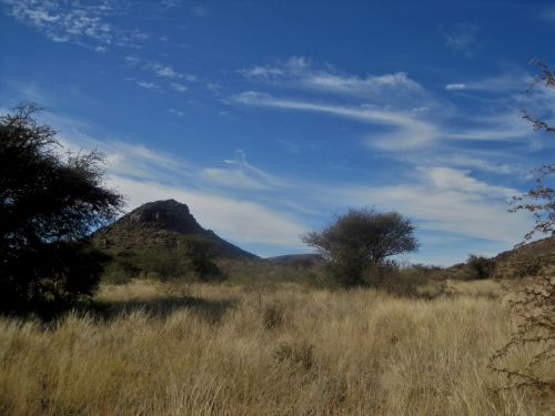 Veld In Northern Cape Province