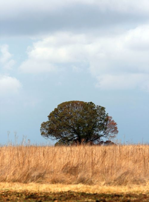 Veld With Tree And Cloud