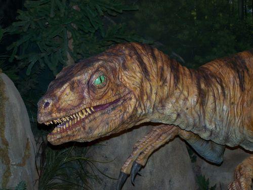 velociraptor dinosaur reptile