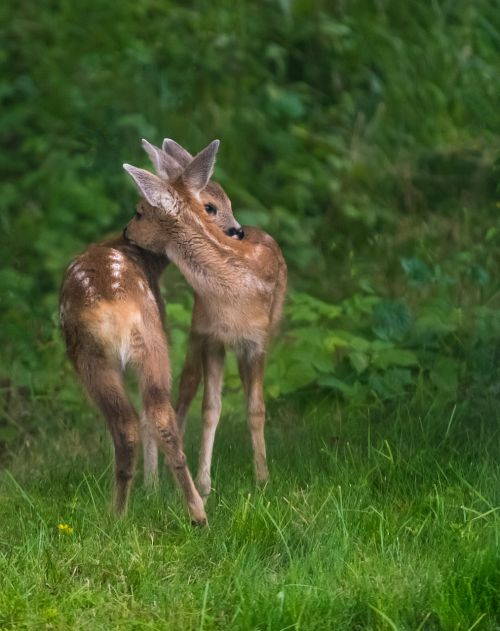 venison siblings love