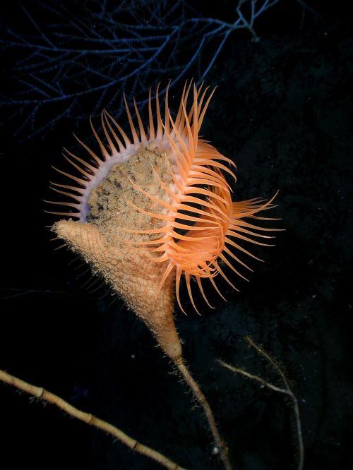 venus flytrap sea anemone sea anemone actiniaria