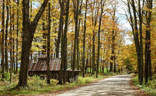 vermont newark fall foliage