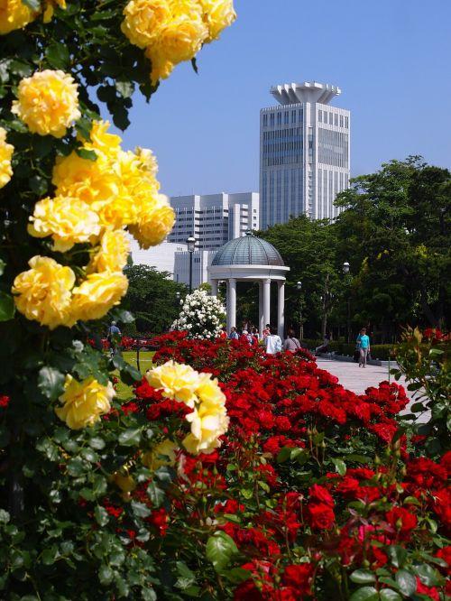 verny park france rose