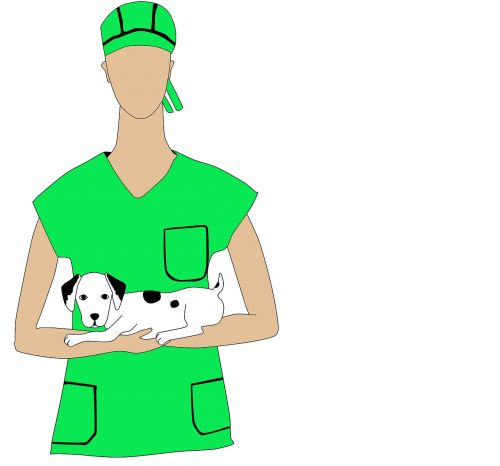 vet pet profession