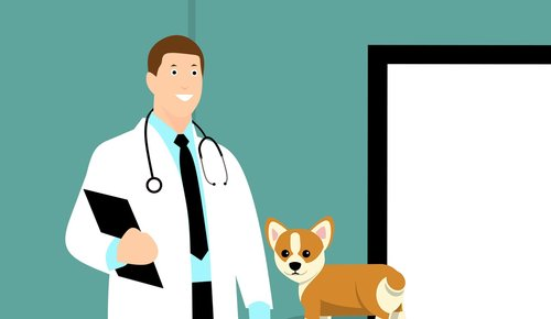 vet  doctor  dog