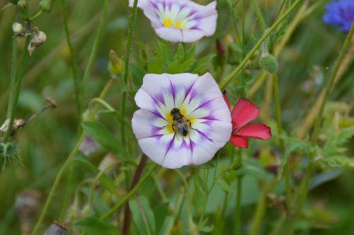 vetch flower garden