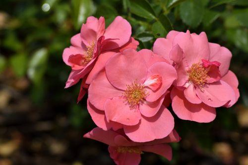 Vibrant Petunia Flower