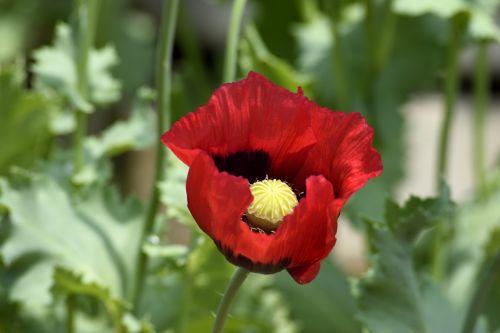 Vibrant Red Flower